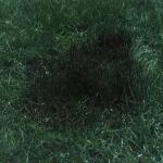 Definitive Grass